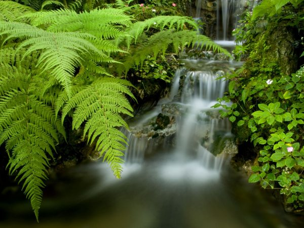 ferns and other plants by a waterfall