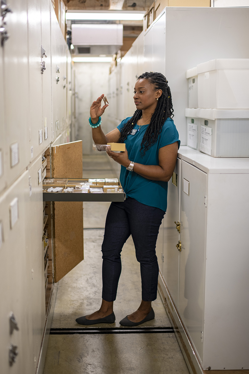 A researcher examines specimens in the environmental archaeology collection