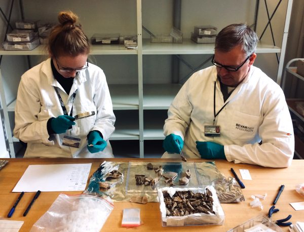 two researchers sort through bones at table