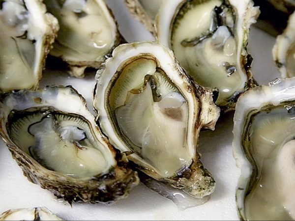 close-up of raw oysters on ice