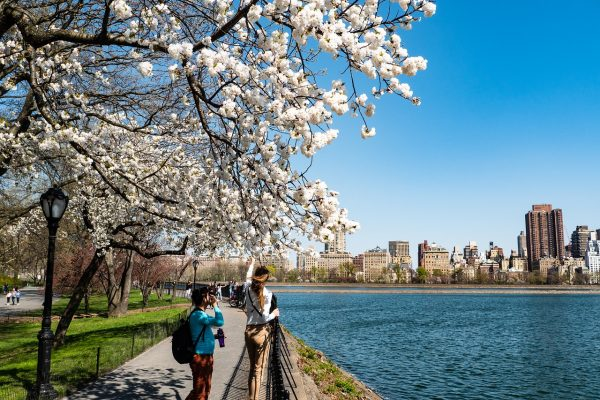 blossoming tree with New York in background