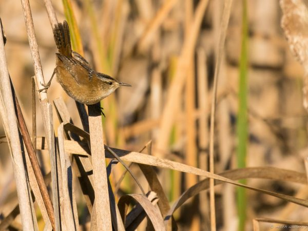 bird on reeds