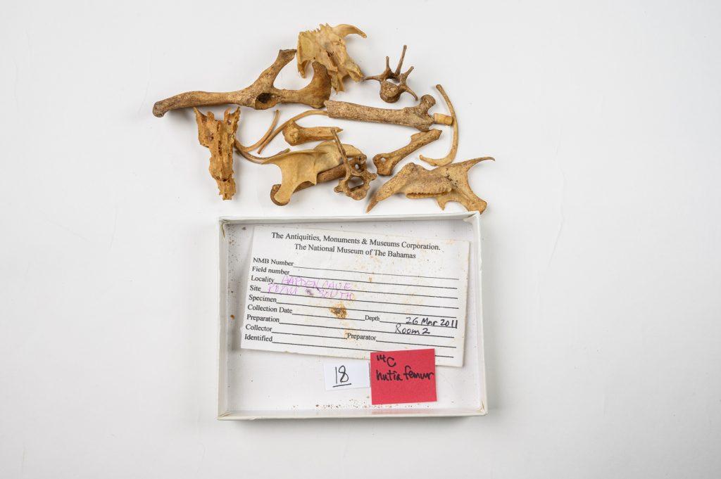 hutia fossils