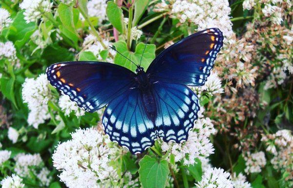 Butterflies' 'secret' to keeping cool hidden in wings ...