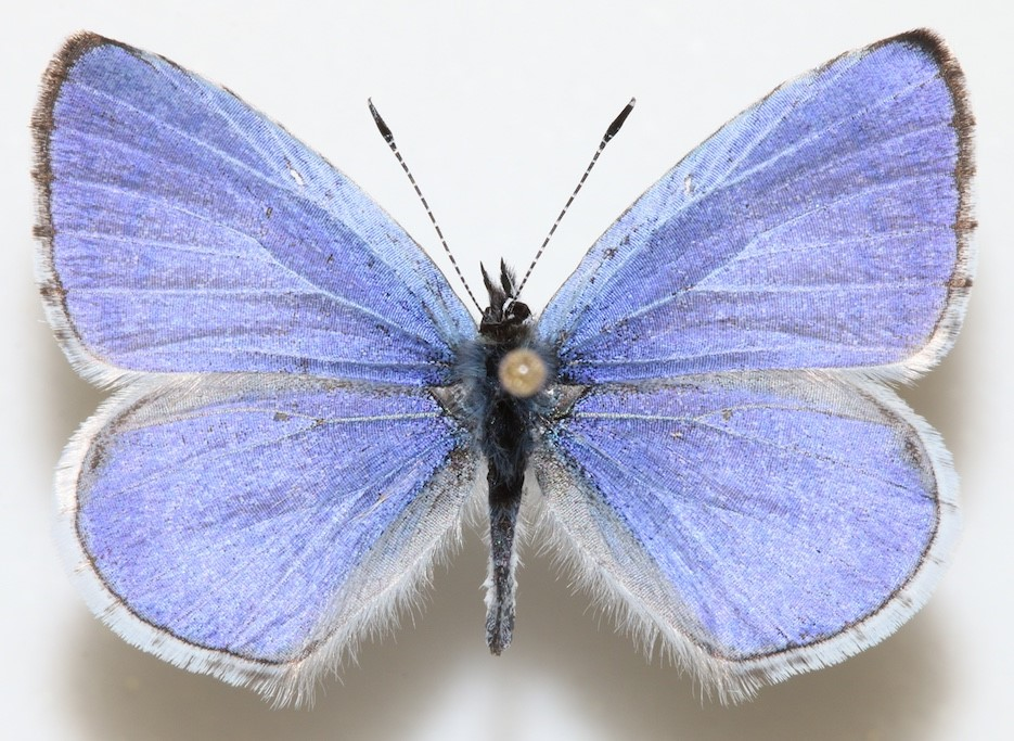 A close-up of a blue butterfly