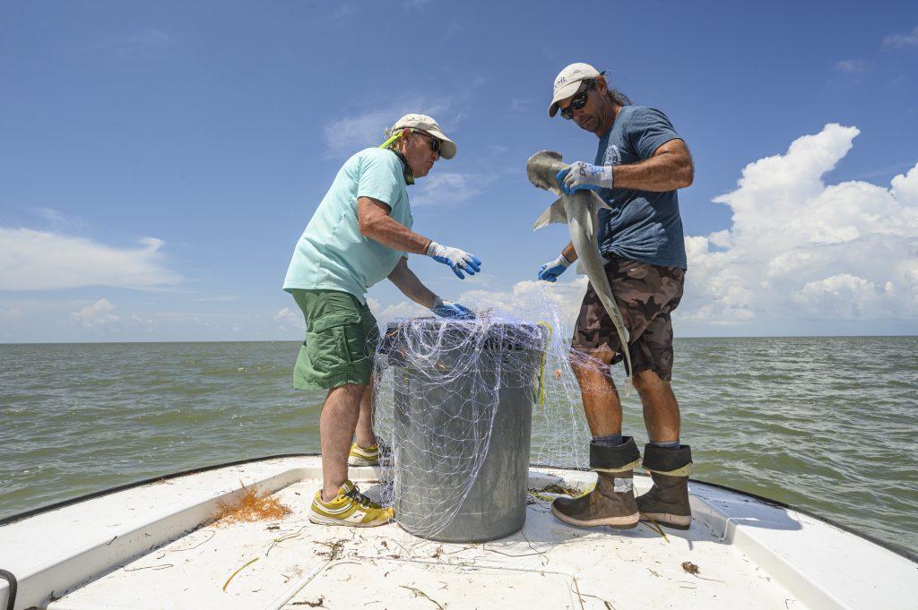 Gavin and Dean capture bonnethead shark