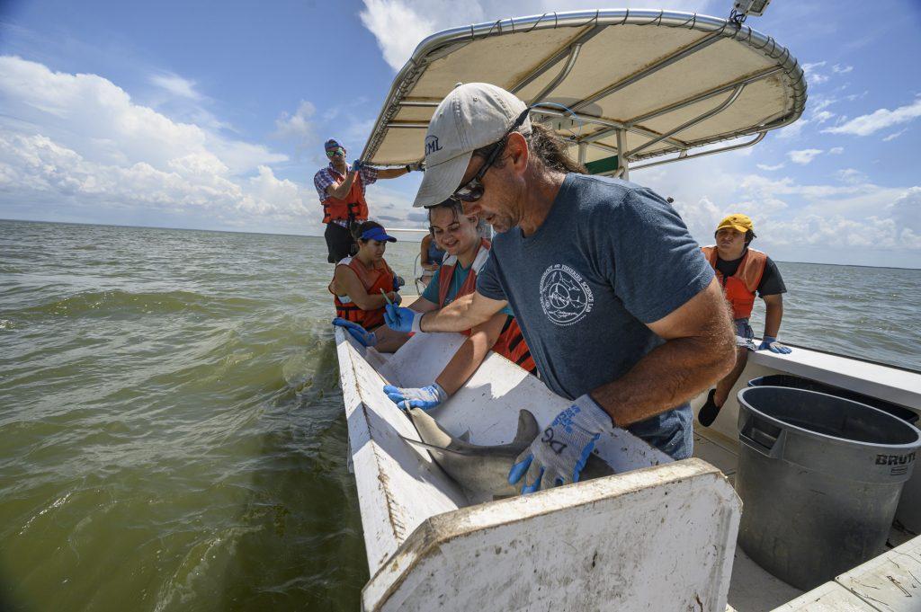 Dean measures shark