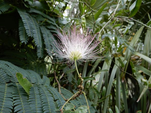 puffy flower