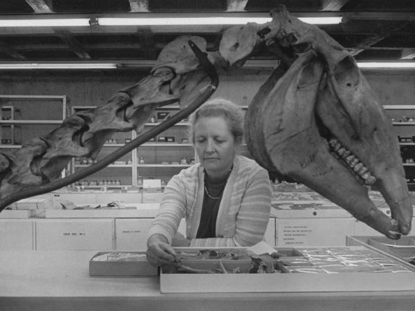 Liz Wing studies animal remains at a lab bench