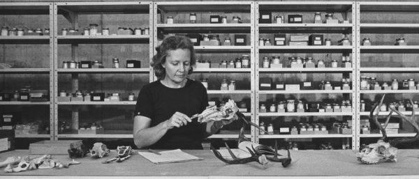 Liz Wing studies animal remains at a lab bench