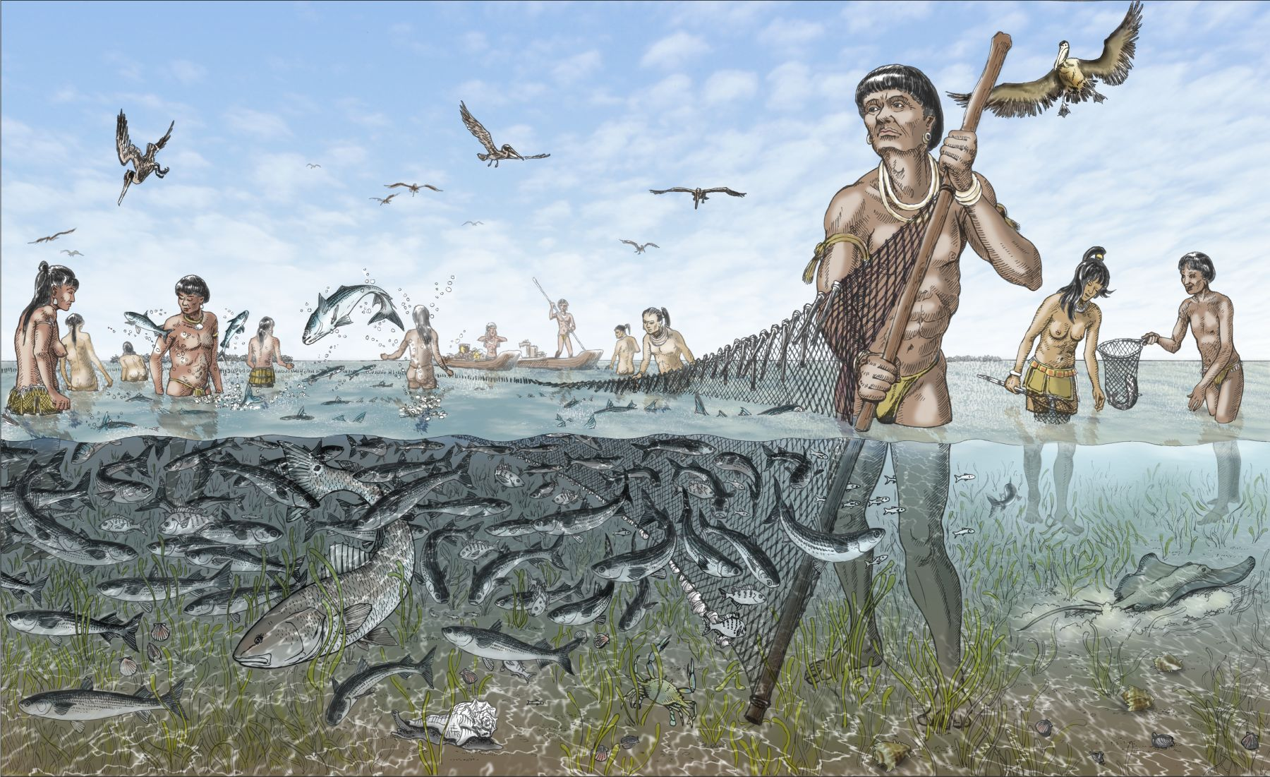 illustration of Calusa fishers with net