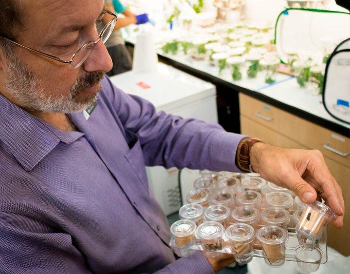 A scientist examining caterpillars