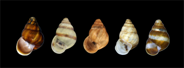 lineup of snail shells of varying colors