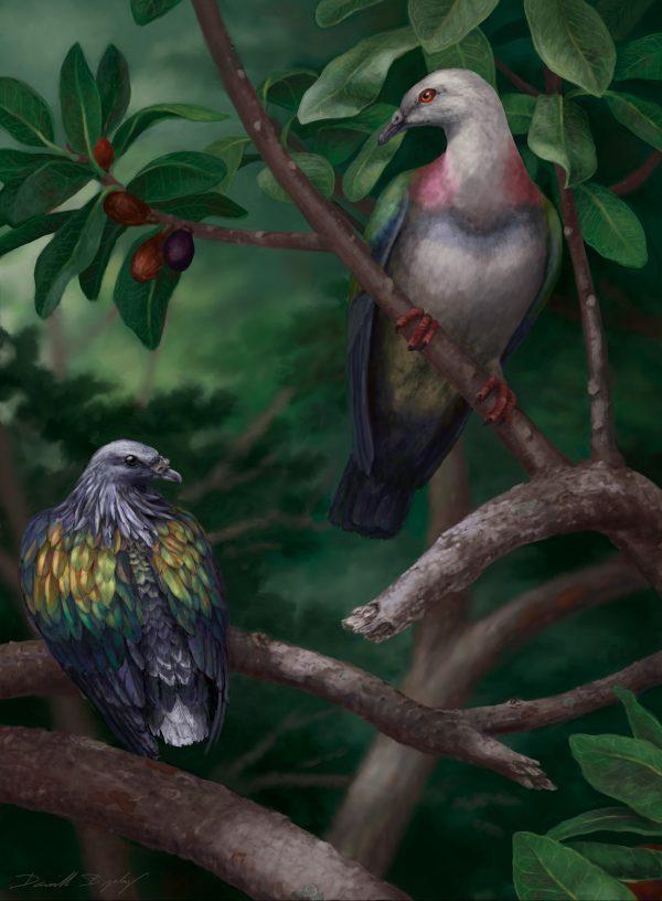 illustration of Tongoenas burleyi