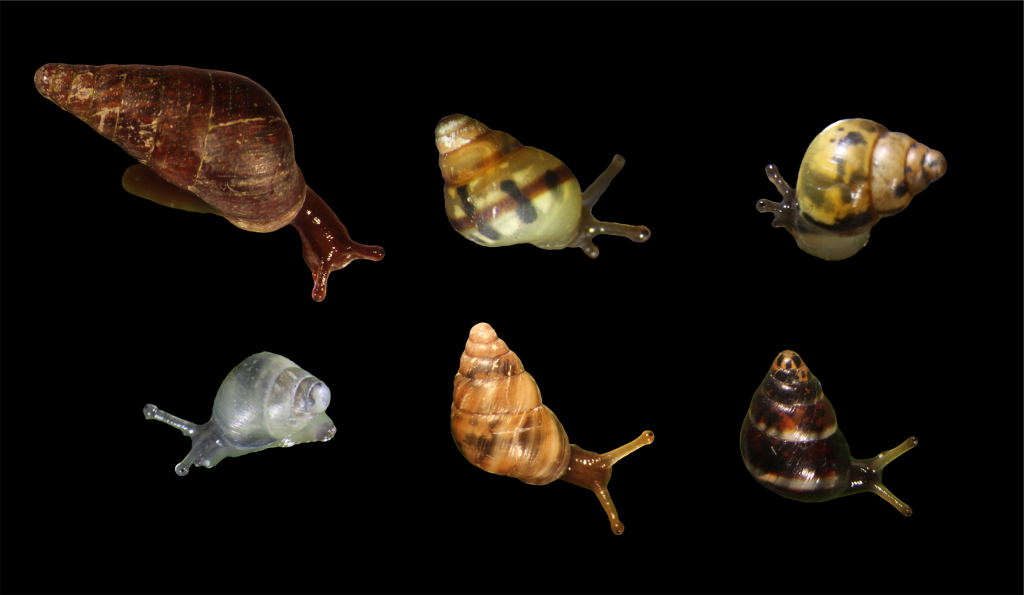 six live snails on black background