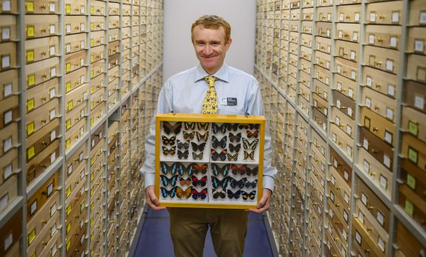 Keith Willmott holding case of butterflies