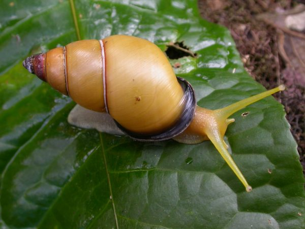 yellow snail on leaf