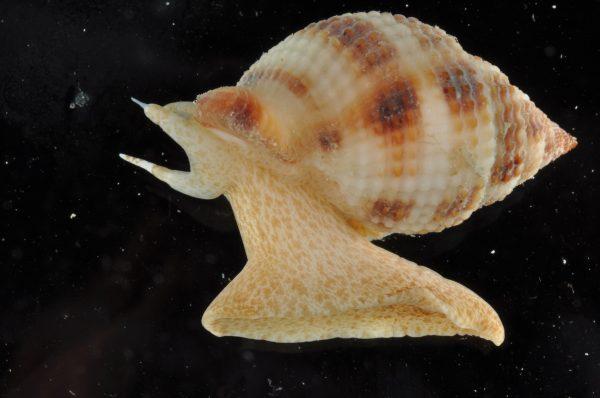 orange and white snail