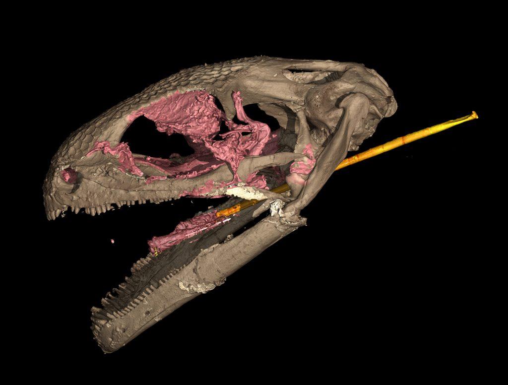 CT scan of albanerpetontid skull