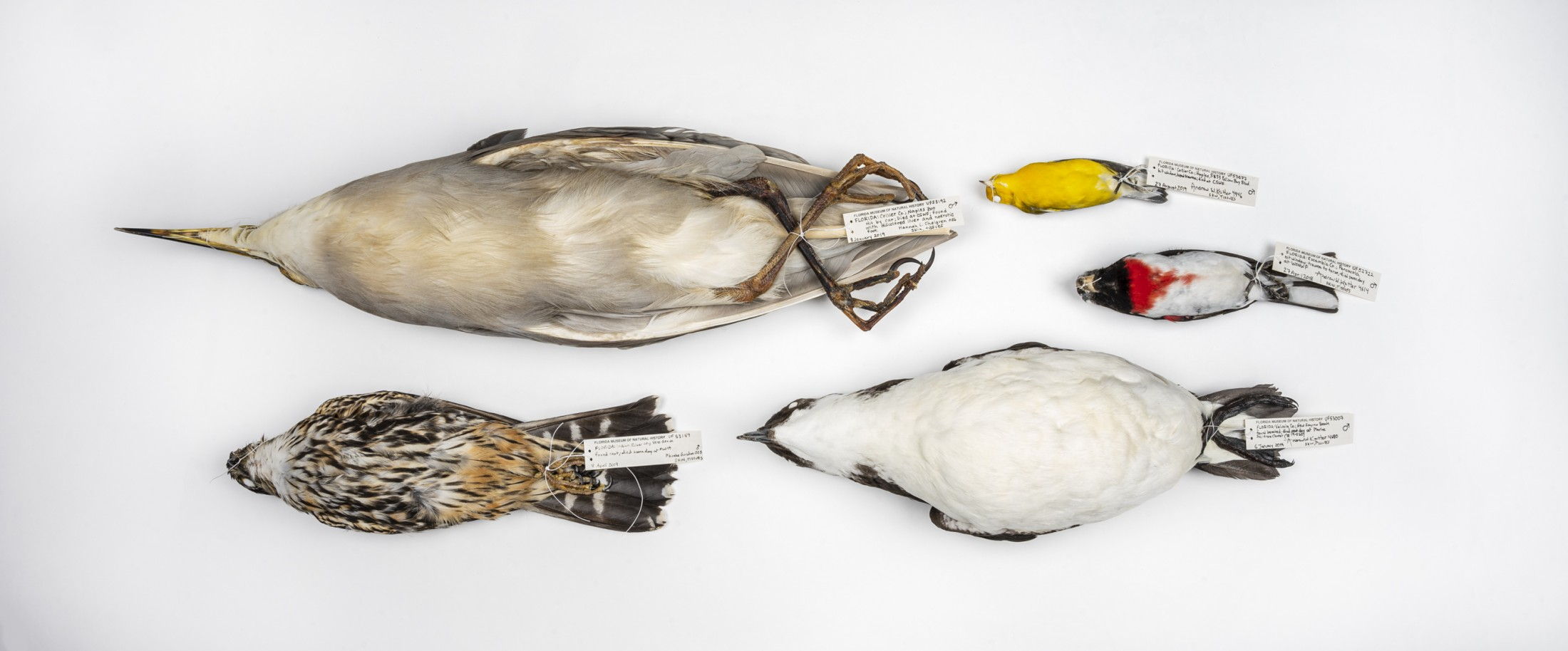A collection of bird specimens