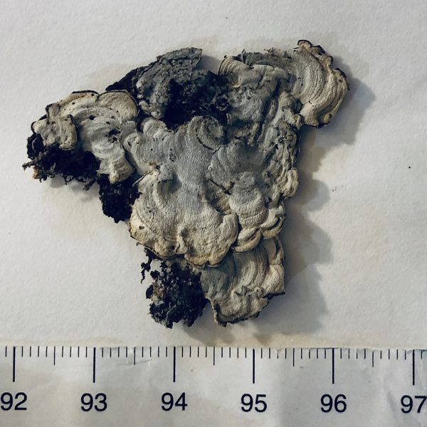 A lichen sample