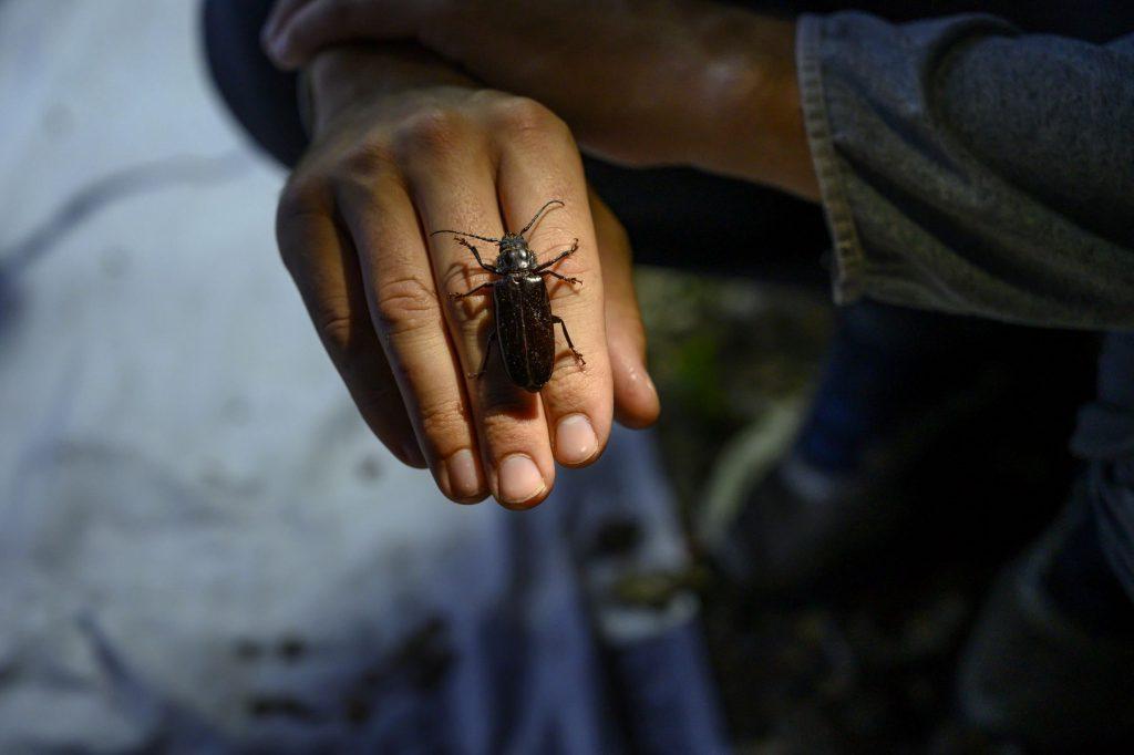 beetle on hand