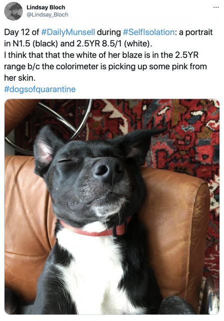 tweet showing dog