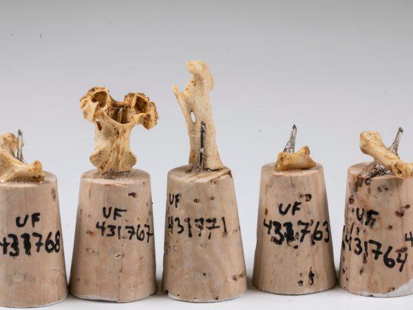 five fossil bones