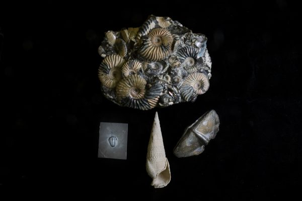 fossi ammonites, brachiopod, snail and trilobite