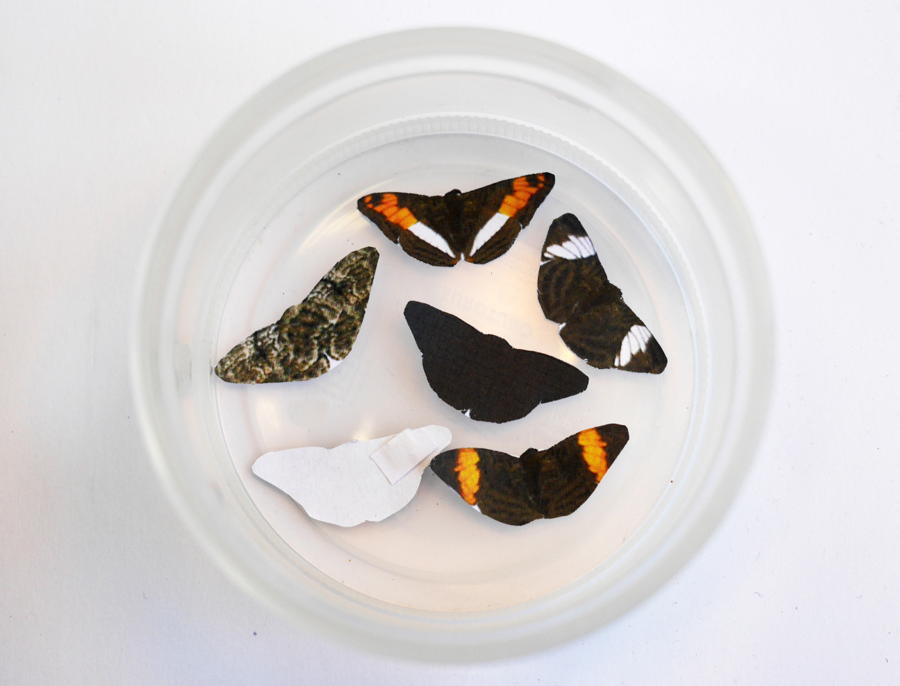 paper butterflies in dish are black, orange, white patterns