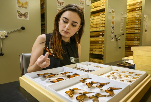 person looking at specimen in collections