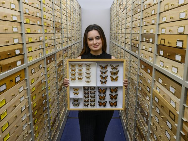 person with butterfly case in collection