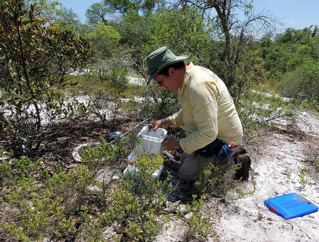 Chase Kimmel surveys habitat for blue calamintha bees