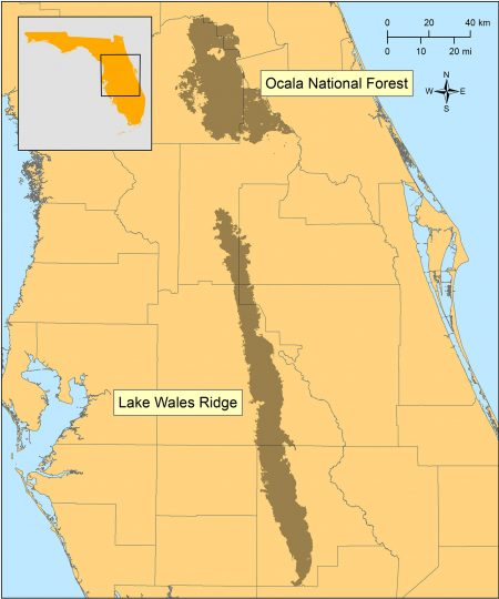 map of Florida with Ocala National Forest and Lake Wales Ridge shaded
