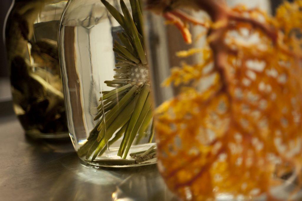 jars of museum specimens