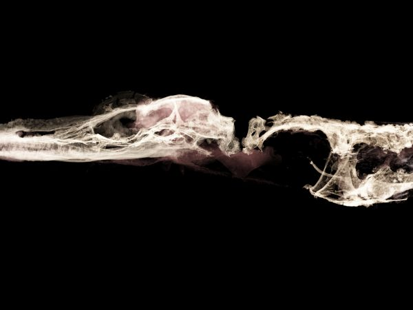 CT scan of fossil lizard