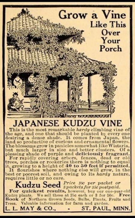 old ad for kudzu