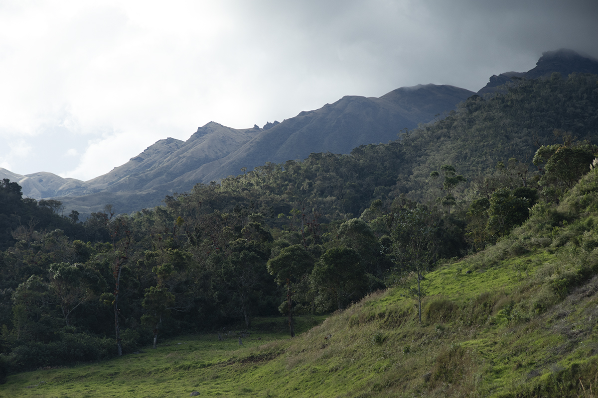 Andean forest fragment in the mountains of Peru