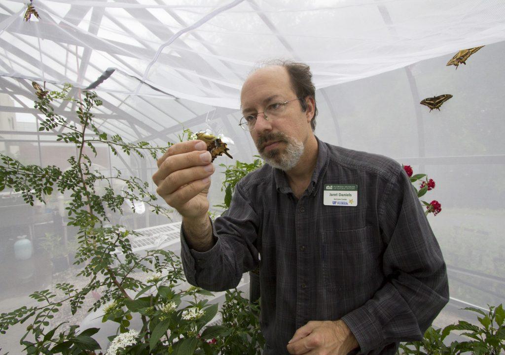 Jaret Daniels inspects a Schaus' swallowtail butterfly
