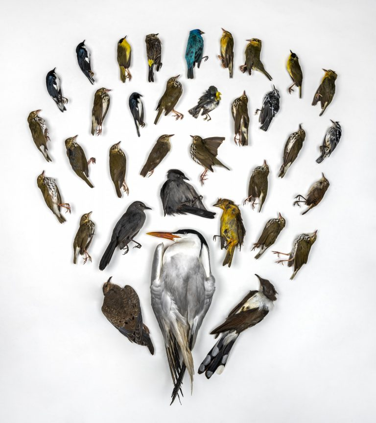 Birds arranged in a heart shape by the Florida Museum of National History