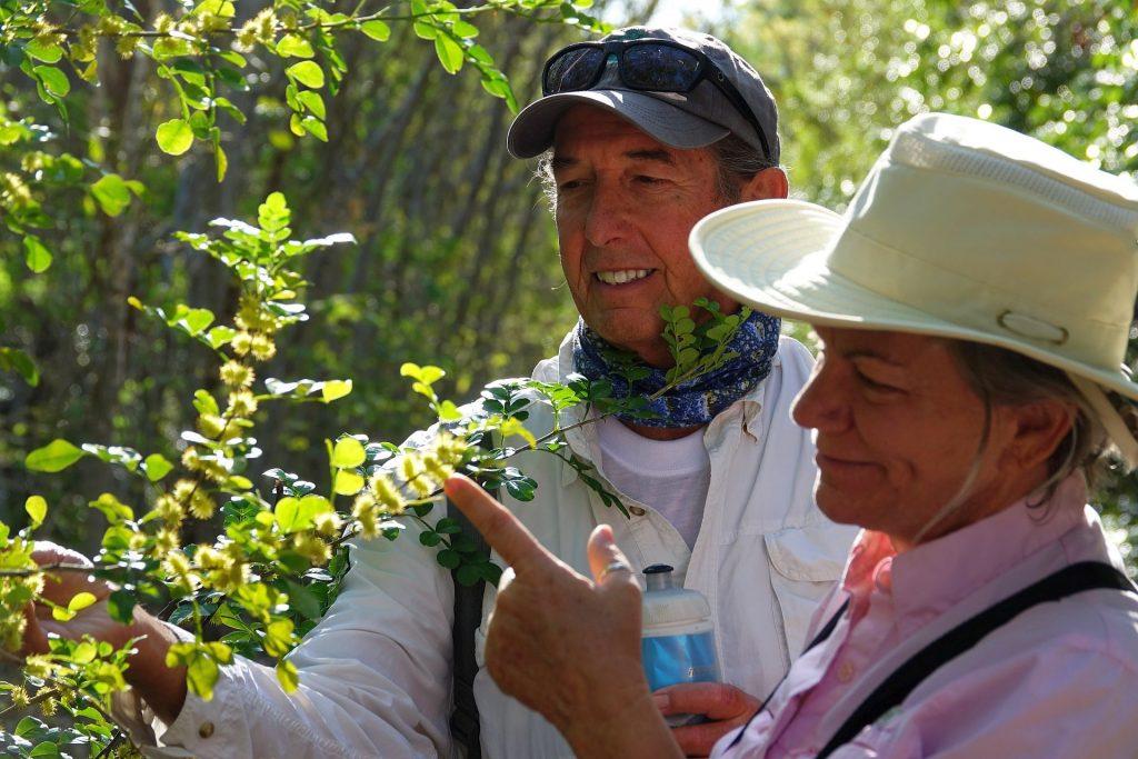 Volunteers inspect wild lime flowers