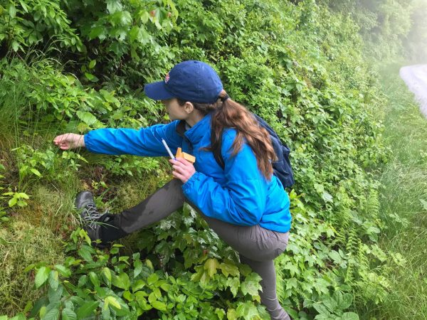 Shelly Gaynor collecting plants along a slope