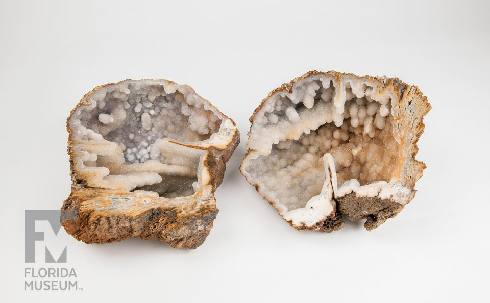 Agatized (Fossil) Coral