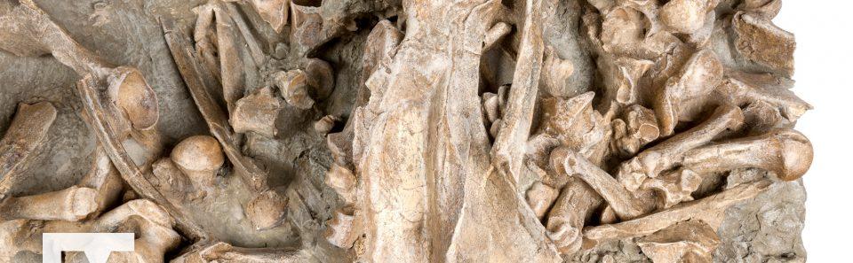 Rhinoceros Bone Bed