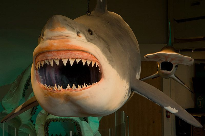 16-foot great white shark model