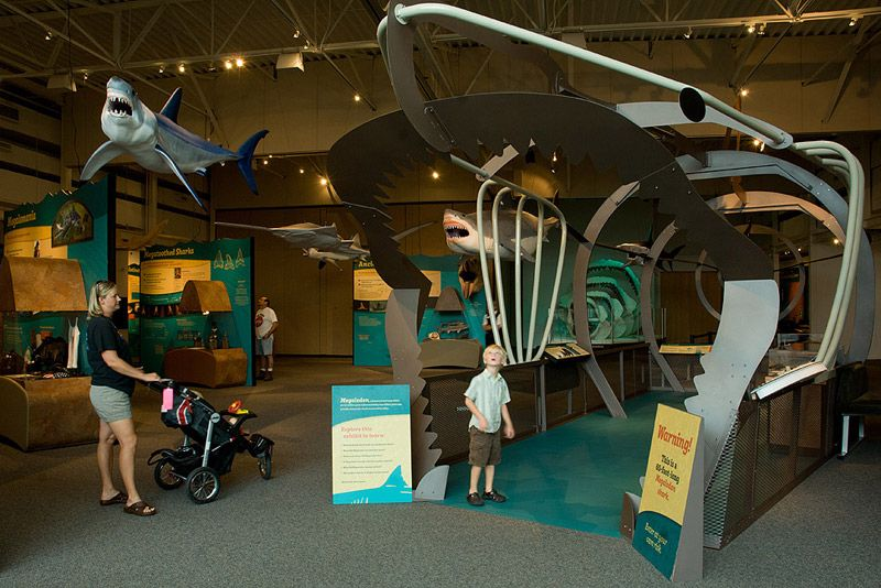 Front view of walk-through metal sculpture of megalodon