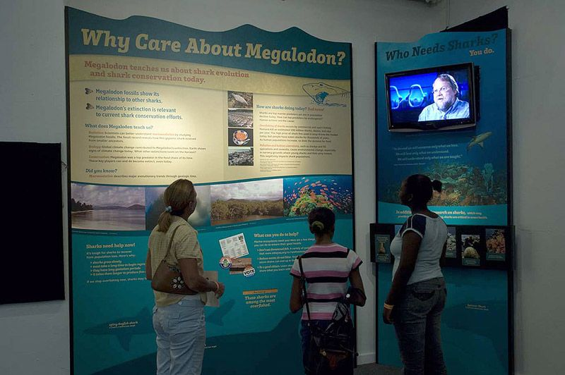 Display on shark conservation