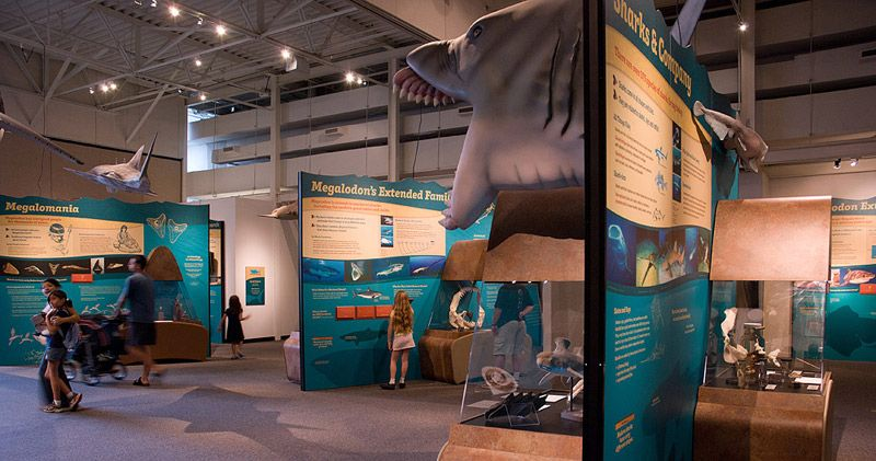 Wide view of modular islands of exhibit