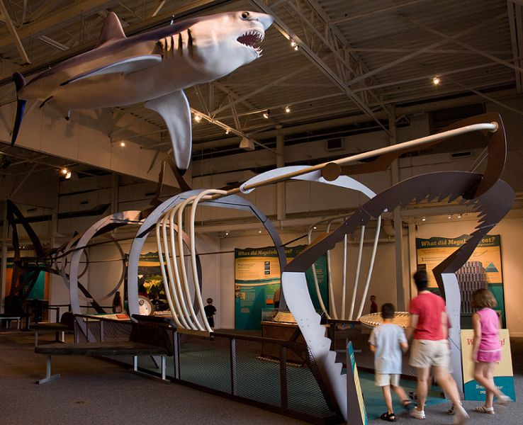 Walk-through metal sculpture of megalodon