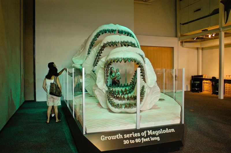 Display of megalodon jaws